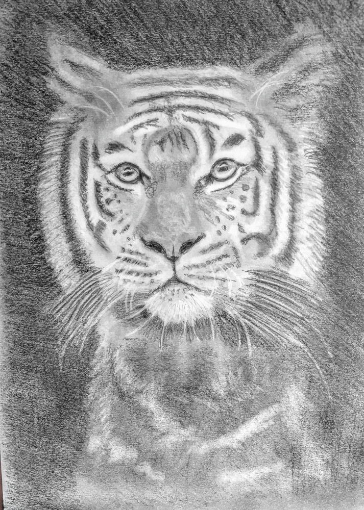Shere Khan by paulb